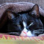 cat-1575231_1920